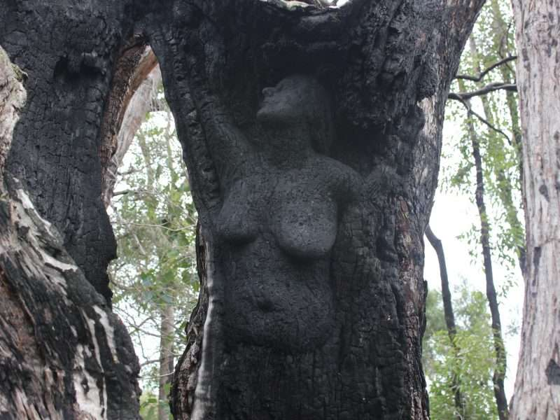Angel of Northcliffe, within the Rising From the Ashes sculpture series, by Kim Perrier on the Understory Art & Nature Trail, Northcliffe, commissioned by Southern Forest Arts
