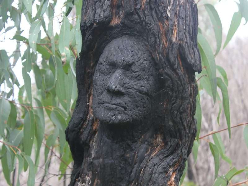 'Denny' by Kim Perrier, sculpture from the 'Rising From the Ashes' series along the Understory Art & Nature Trail, Northcliffe, Western Australia, commissioned by Southern Forest Arts