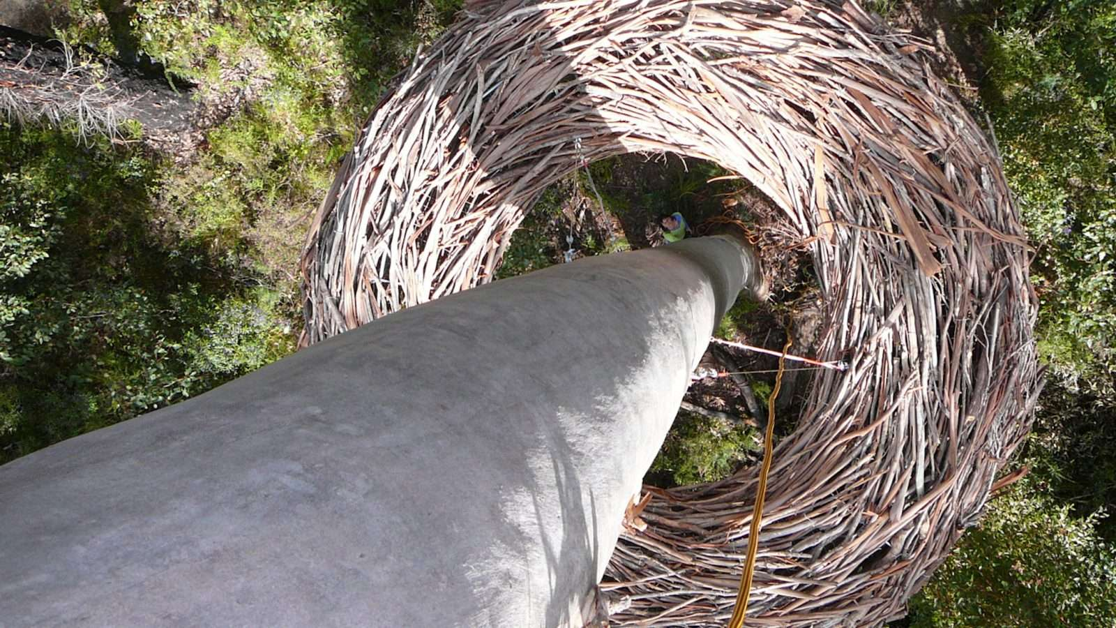 'Whole, You Were Meant to Be Here' by Lorenna Grant on the Understory Art & Nature Trail, developed by Southern Forest Arts in Northcliffe, Western Australia
