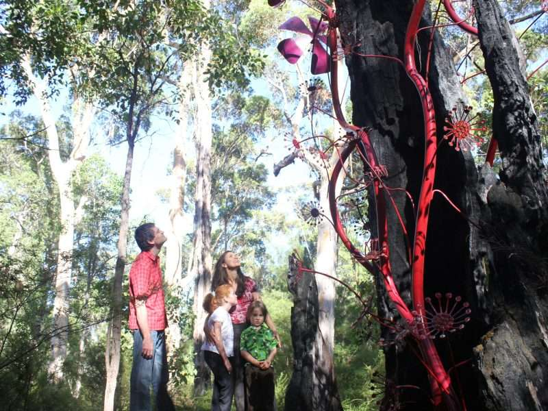 'Sundew' by Nat Williamson was commissioed in 2006 for the Understory Art & Nature Trail in Northcliffe by Southern Forest Arts - its a firm favourite with families