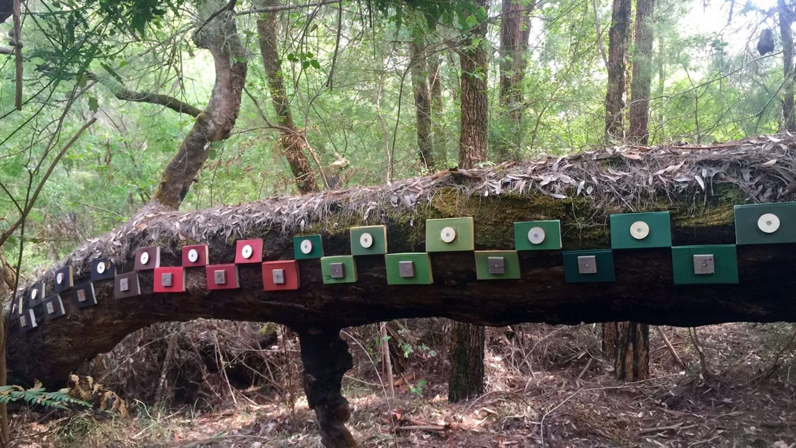 'Treecycle' a sculpture by Cecile Williams, featured along the Understory Art & Nature Trail, Northcliffe, Western Australia, commissioned by Southern Forest Arts in 2019