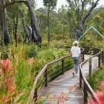 Entry arch to the Understory Art & Nature trail in Northcliffe developed by Southern Forest Arts