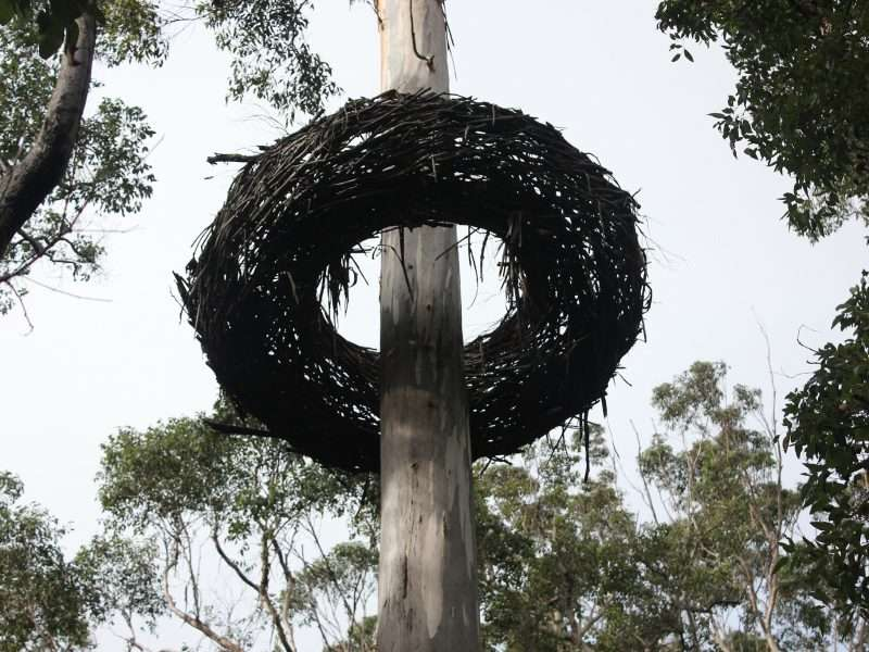 'Whole, You Were Meant To Be Here' by Lorenna Grant. Commissioned in 2006 by Southern Forest Arts for the Understory Art & Nature Trail in Northcliffe, Western Australia