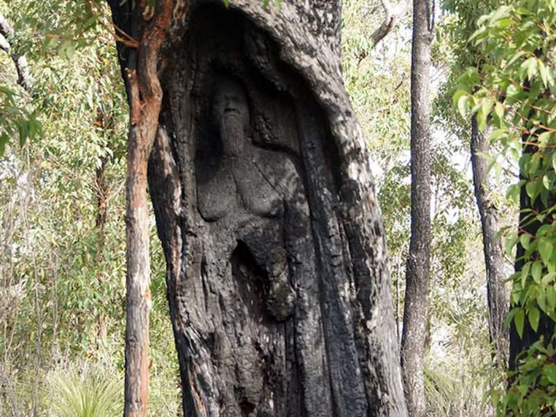 Rising From the Ashes - Noongar Elder, Wayne Webb' by Kim Perrier - Understory Art & Nature Trail, Northcliffe (Commissioned by Southern Forest Arts in 2015) photo Kim Perrier