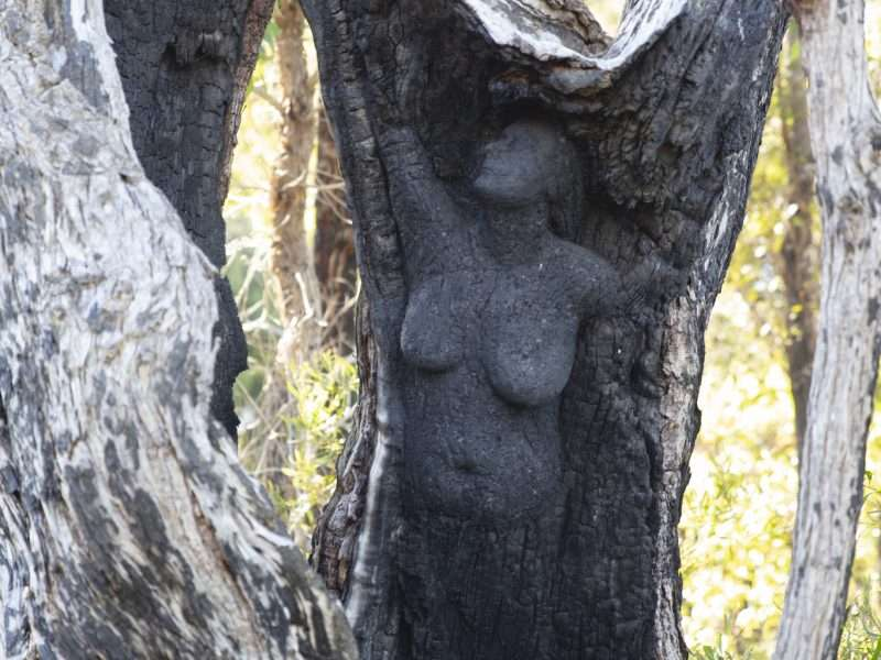 Rising From the Ashes - Northcliffe's Angel' by Kim Perrier - Understory Art & Nature Trail, Northcliffe (Commissioned by Southern Forest Arts in 2015) photo by Bo Wong