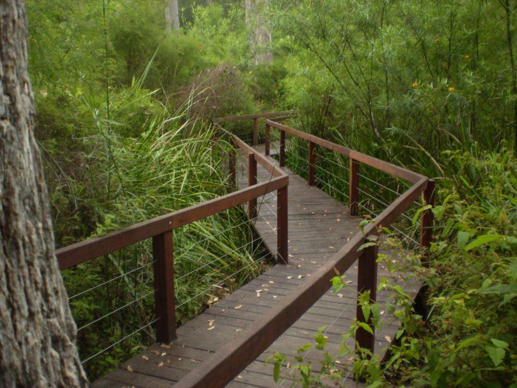 Boardwalk 1 - lush vegetation - Understory Art & Nature trail, Northcliffe