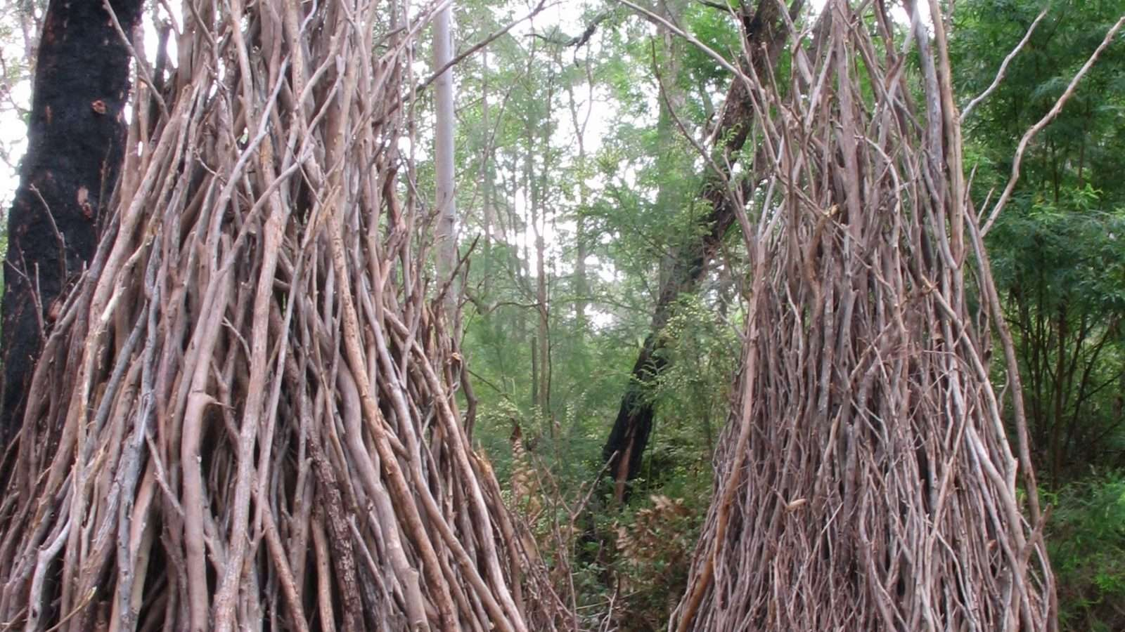 Bower by Gemma Ben Ari, commissioned in 2007, Understory Art & Nature Trail, Northcliffe