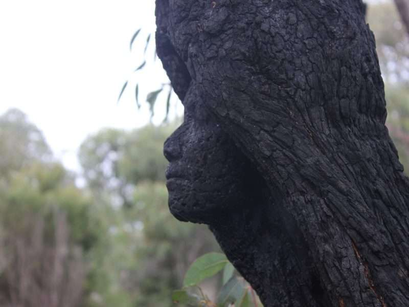 Kim Perrier - Gwen, Rising From the Ashes by Kim Perrier, Understory Art & Nature Trail, Northcliffe, commissioned by Southern Forest Arts in 2015