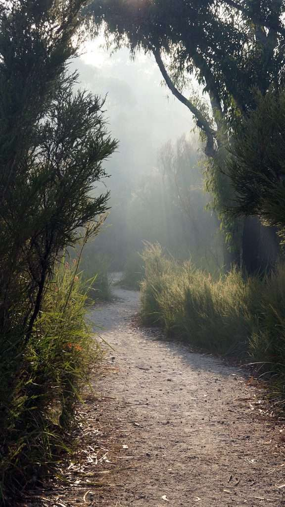 Northcliffe-Morning- Understory Art & Nature Trail (Photo by Kim Perrier)