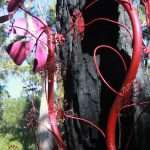 'Sundew' by Nat Williamson, Understory Art & Nature Trail, Northcliffe, commissioned by Southern Forest Arts in 2006, Photo by Peter Hill