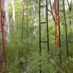 ladders - Understory Art and Nature trail