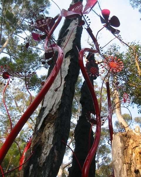 looking up sundew , Understory Art & Nature Trail, Northcliffe