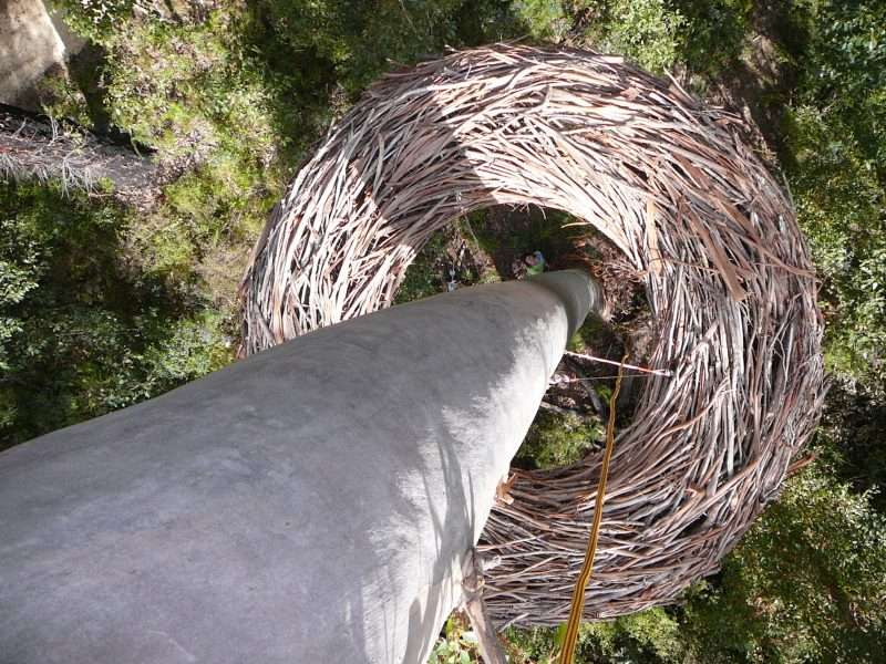lorenna base tree - Understory Art & Nature Trail, Northcliffe