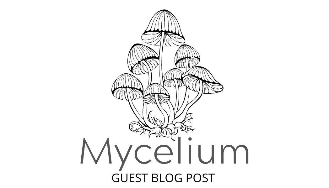 Mycelium Guest Blog Post Feature image(2)